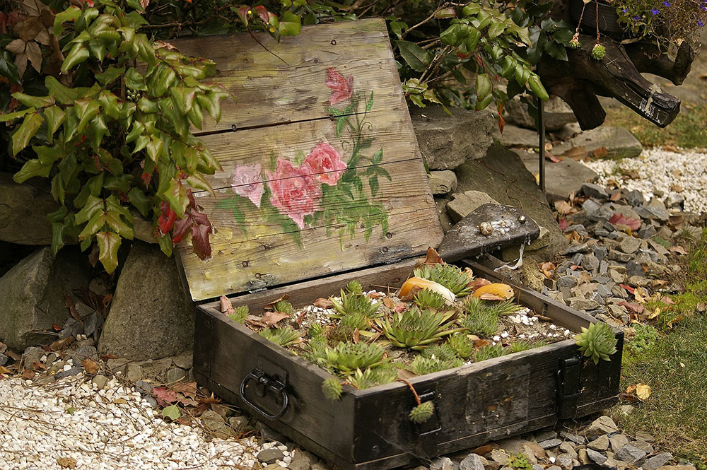 Creare un piccolo giardino in una vecchia scatola